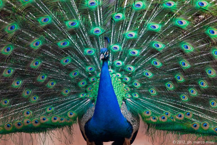Mondo_animale_2012_0010_