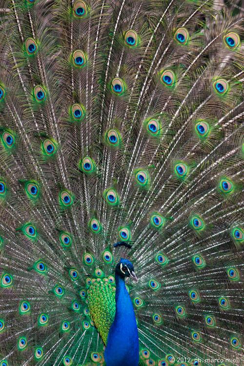 Mondo_animale_2012_0011_