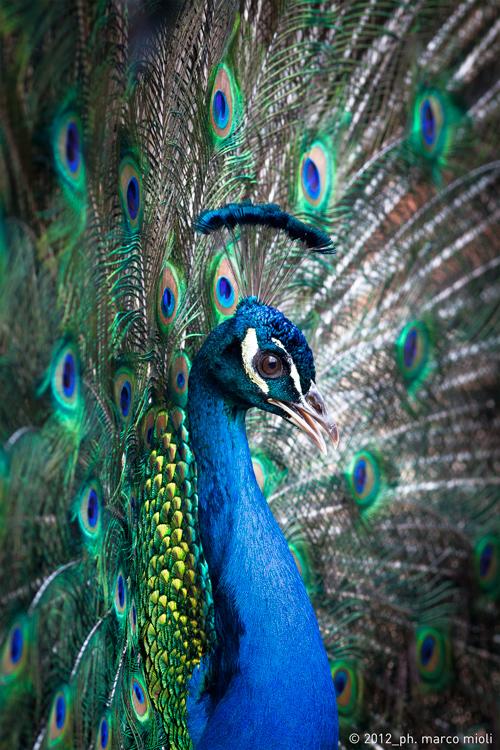 Mondo_animale_2012_0012_