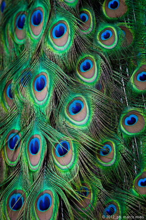 Mondo_animale_2012_0014_