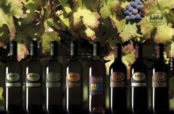 Azienda vinicola Santa Caterina  : vino