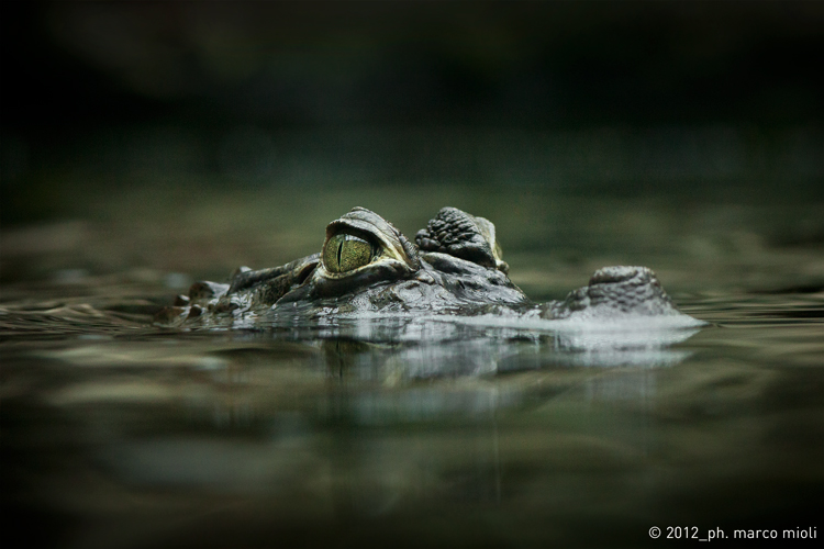 Mondo_animali_2012_0008